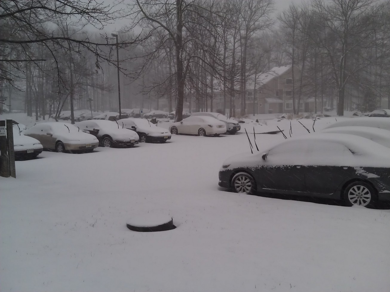 Cars surrender to the snow